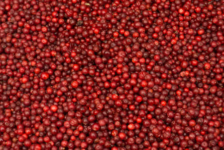 Red ripe lingonberry in bulk for sale