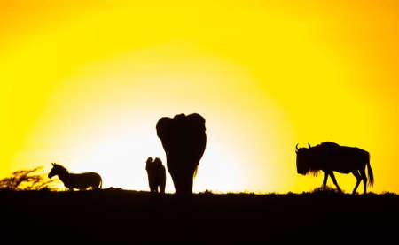 Animals Sunset Silhouette