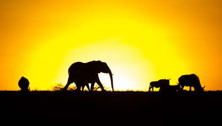 Silhouettes of Animals in Masai Mara