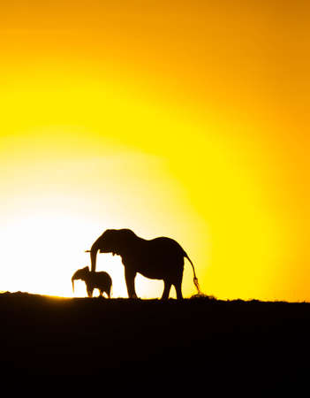 Silhouette of elephant and calf