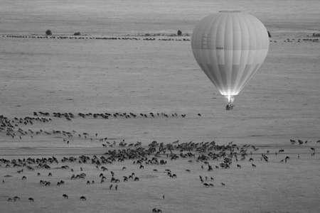 bw: Hot Air Balloon in Masai Mara in BW Stock Photo