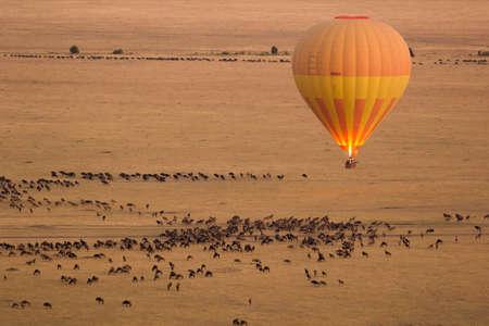バック グラウンドでヌーとマサイマラ国立保護区の熱気球