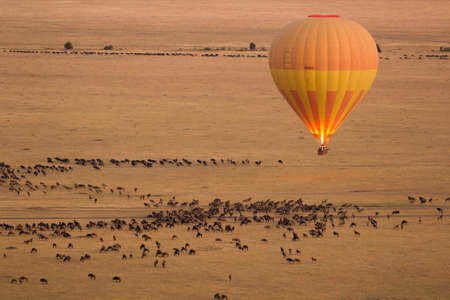 masai: Hot Air Balloon in Masai Mara with Wildebeest in background Stock Photo