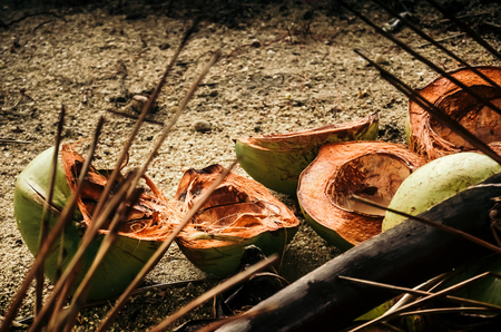Empty green shells of coconuts lying on sand of Kamala beach.