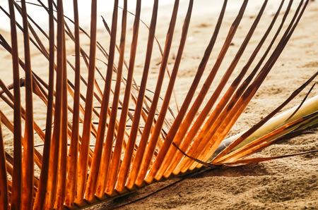 Stem of dry palm branch lying on sandy beach. Stock Photo