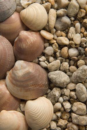 bluer: Sea Shells closeup composition