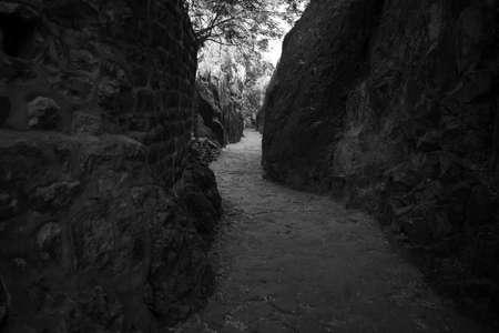 Image Of  forest track shot near Mehrangarh Fort, Jodhpur Archivio Fotografico - 133354788