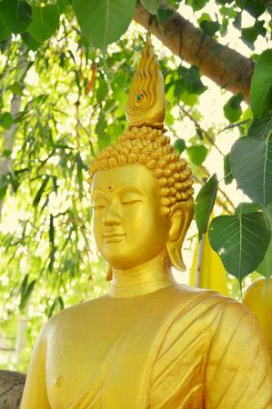 buddism: Statue of buddha