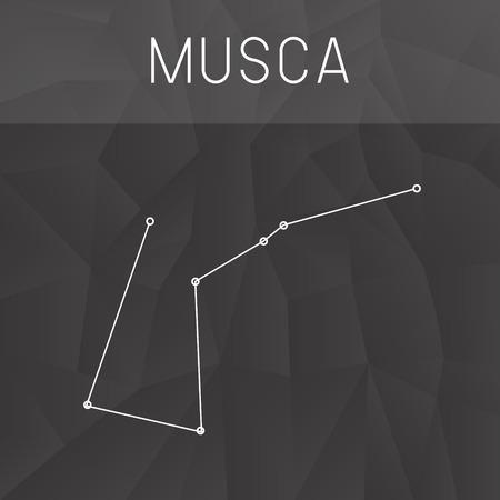 constelacion: constelaci�n de Musca