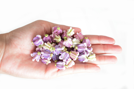 Violet flower drake artificial garland on female hand, isolated.