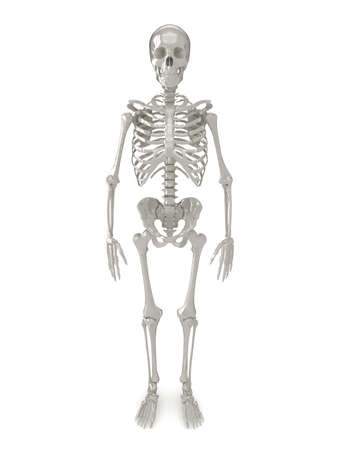 skeletal: Glossy skeleton illustration, isolated on a white background. See my portfolio for alternative views.