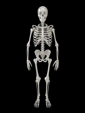 Glossy skeleton illustration, isolated on a black background. See my portfolio for alternative views. illustration