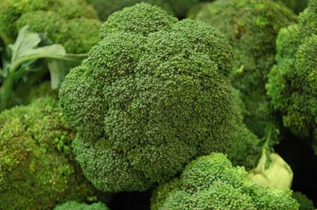 brocolli: The Brocolli Patch