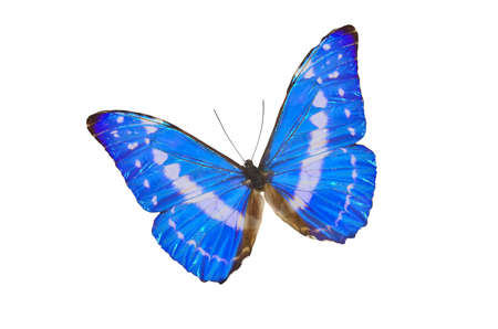 frailty: Closeup view of a blue butterfly isolated on a white background