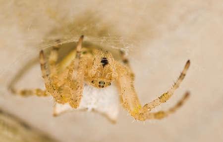 arachnophobia animal bite: A spider on its web underneath a deck.