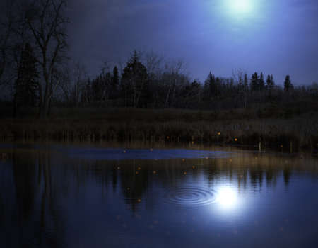 reflection: An image of fireflies and the moon reflecting in a pond at night.