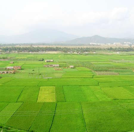 groene groei van rijst in de lente met de Sanya luchthaven in de achtergrond op het eiland Hainan, China