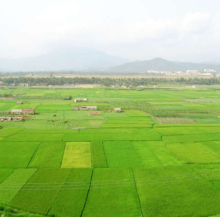 green growth of rice in springtime with the sanya airport in the background on the island of hainan, china Archivio Fotografico