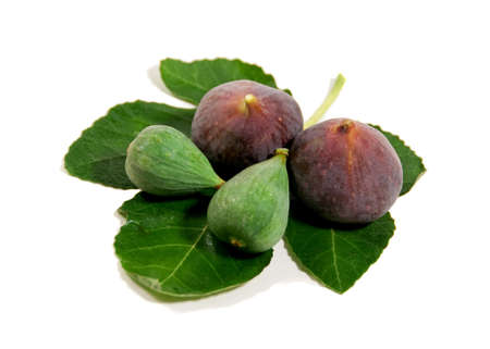 freshly picked young, green and ripe figs, isolated on white