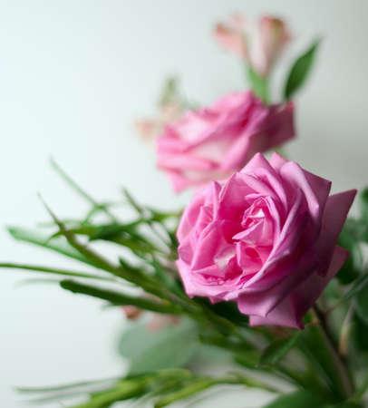 beautiful fresh flowers for valentine Stock Photo