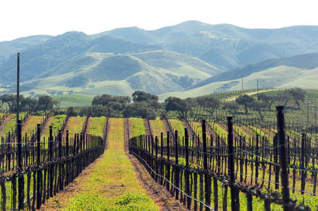 groene groei in central valley, Californië Stockfoto