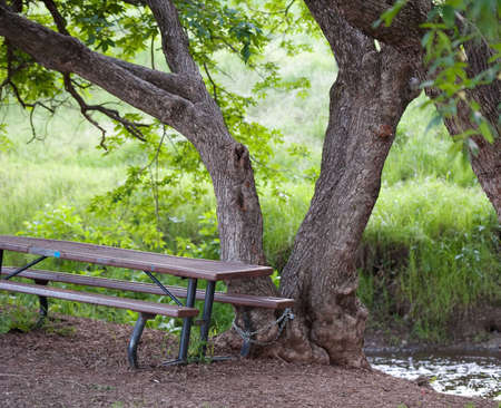 picnic table chained to a tree by a stream
