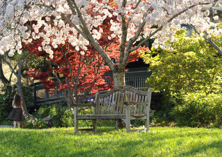 a park bench beneath a blossoming tree Stock Photo