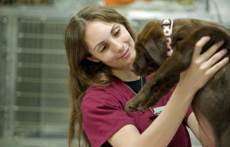 moving a young pup, with focus on the veterinary assistant Stock Photo