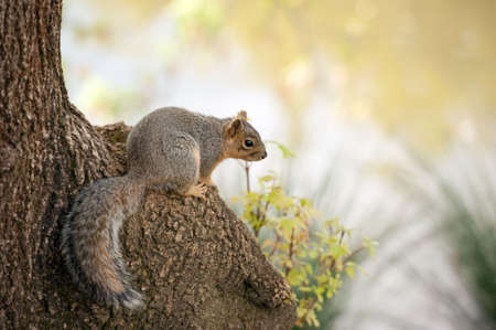 a red squirrel perched on a tree trunk