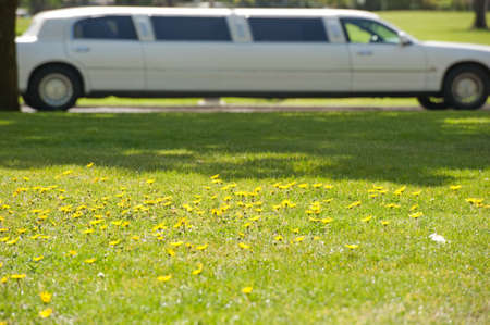 field of daisies and a stretch limo