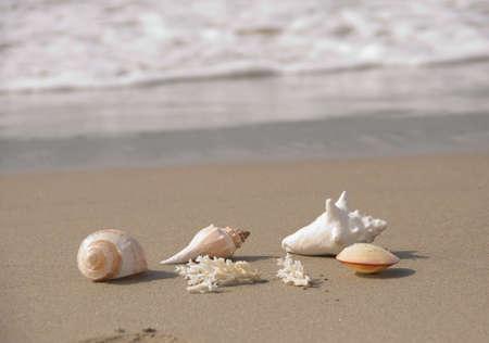 sea, sand, surf and shells