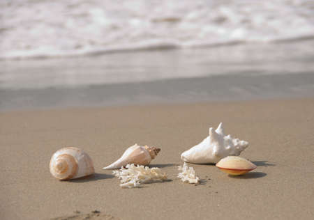 sea, sand, surf and shells