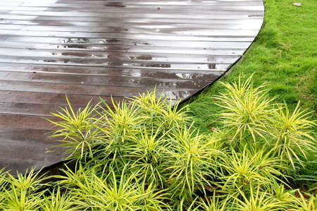 geometric garden landscape with deck and plants Archivio Fotografico