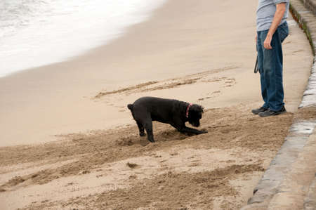 walking the dog at san fracisco beach Banco de Imagens