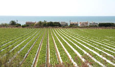 vegetable fields overlooking the pacific ocean in ventura county