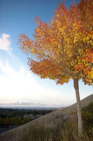 orange leaves of autumn