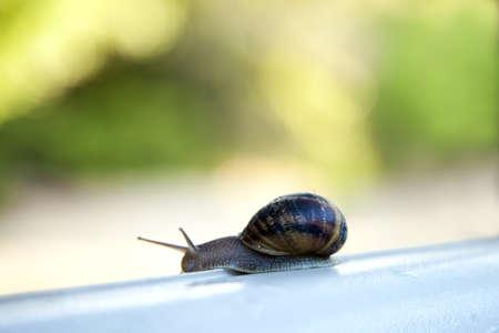 Helix pomatia, a snails life Stock Photo
