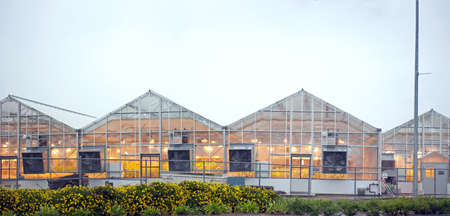 lighted greenhouses in uc davis