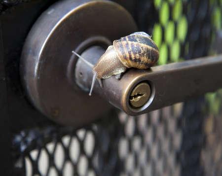 Helix pomatia, a snail's life