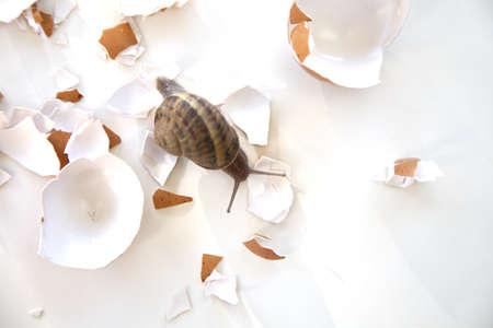 a snail navigates the rough road of life Archivio Fotografico