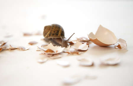 a snail navigates the rough road of life Banco de Imagens