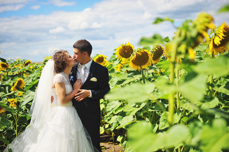 newlyweds: Newlyweds at the field of sunflowers