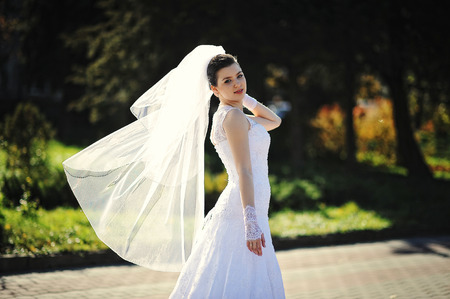 comely: Brunette comely bride with veil Stock Photo