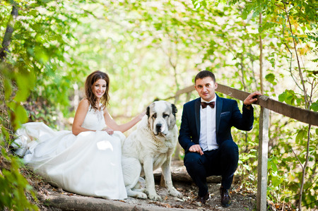 gorgeus: Very sensual and gorgeus wedding couple on the picturesque landscapes with big dog