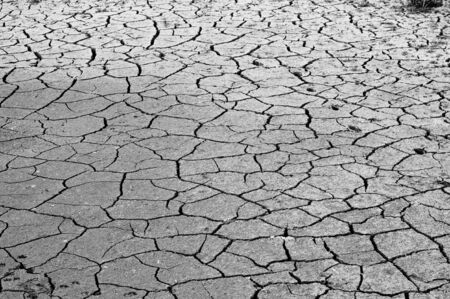 ecological disaster: Cracked ground, soil salinity, ecological disaster