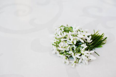 glossiness: Snowdrop flowers at white glossiness background