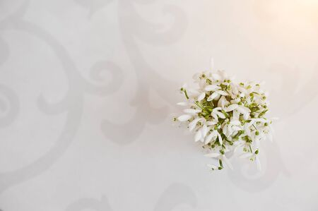 glossiness: Snowdrop flowers at vase on white glossiness background with ornament