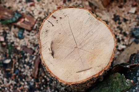 stockpile: Round firewood stump close up Stock Photo