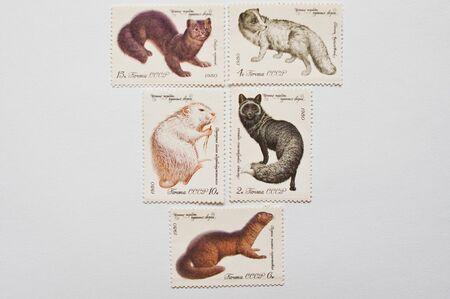 furry animals: UZHGOROD, Ucrania - alrededor de MAYO, 2016: Colección de sellos impresos en la URSS muestra valiosas especies de animales peludos, alrededor de 1980