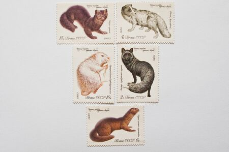 furry animal: UZHGOROD, UKRAINE - CIRCA MAY, 2016: Collection of postage stamps printed in USSR shows valuable species of furry animals, circa 1980